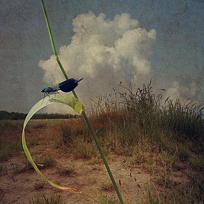 The Dragonfly - p1633m2209082 by Bernd Webler