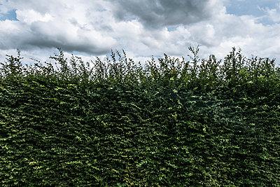 Hecke und Regenwolken - p354m1467170 von Andreas Süss