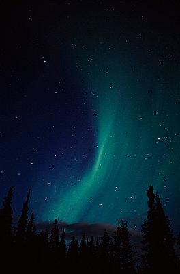 Aurora borealis above spruce trees, Alaska, USA - p44210211f by Design Pics