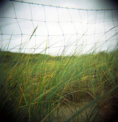 Strandgras - p5679776 von Christophe Boete