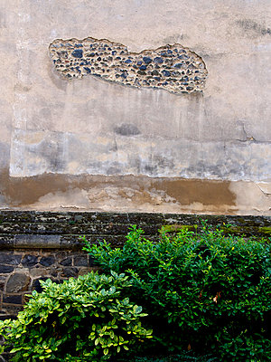 Green plant in front of a dilapidated stone wall - p813m925748 by B.Jaubert