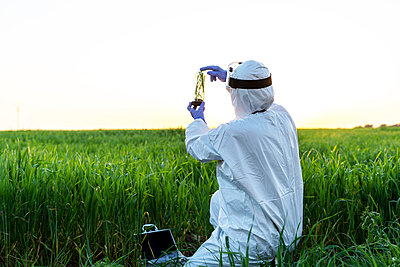 Female scientist researching in field and holding a glass with plant at sunset - p300m2170123 by Eloisa Ramos