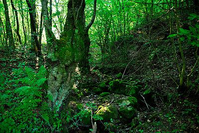 Wald - p56711180 von Le Cercle Rouge