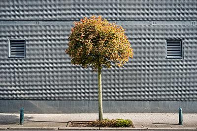 Kleiner Baum - p229m2004812 von Martin Langer