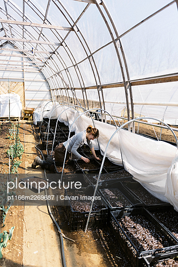 A young female farmer checking her bulb flowers in the greenhouse - p1166m2269687 by Cavan Images