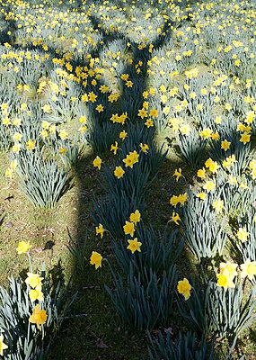 Springtime - p1043m892817 by Ralf Grossek