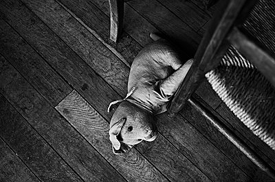 Toy on the floor - p1661m2245388 by Emmanuel Pineau