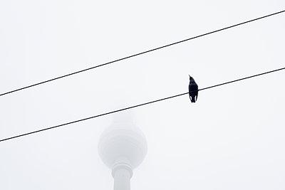 Vogel am Alex - p354m1215329 von Andreas Süss