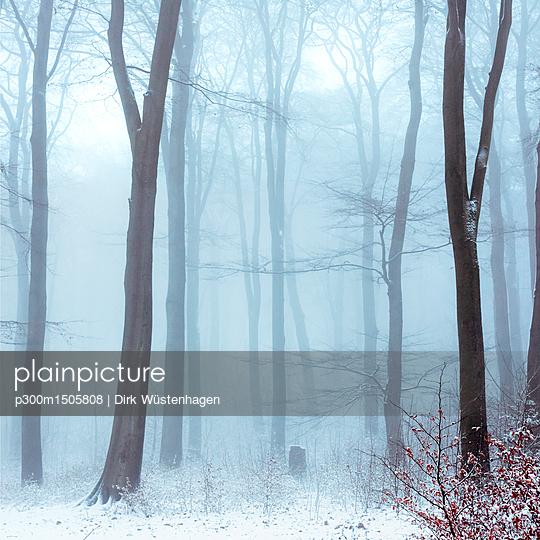 Fog in snowcapped winter forest - p300m1505808 by Dirk Wüstenhagen