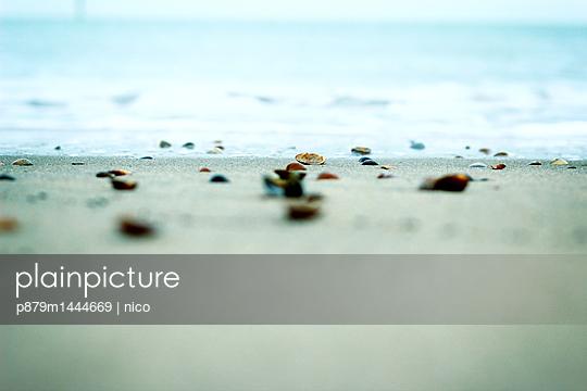 Shells on beach - p879m1444669 by nico