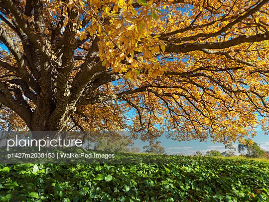 p1427m2038153 von WalkerPod Images