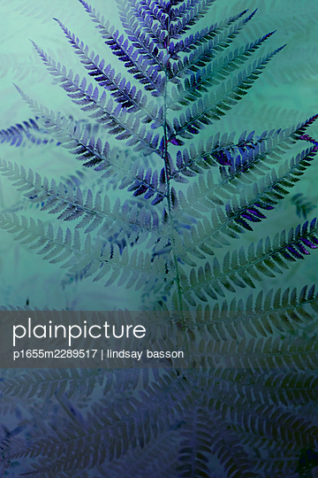 Double Exposure Of A Fern - p1655m2289517 by lindsay basson