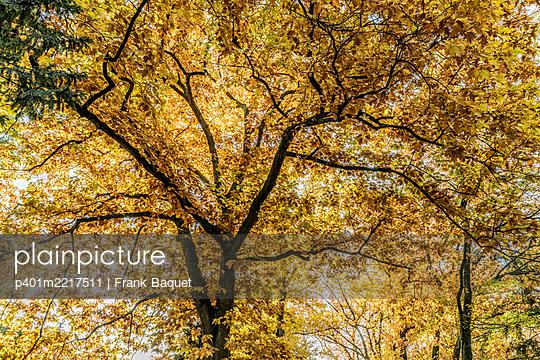 Bäume mit Herbstlaub - p401m2217511 von Frank Baquet