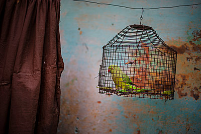 Wire cage - p1007m1059846 by Tilby Vattard