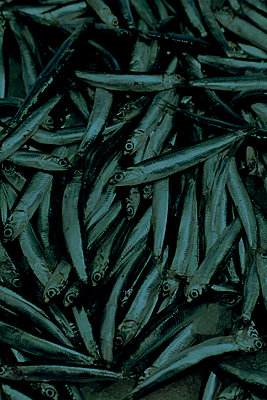 Anchovies, Venice, Italy - p1028m2002132 by Jean Marmeisse