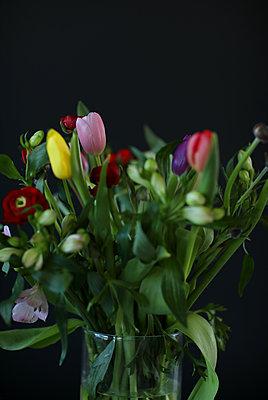 Blumen im Dunkeln - p981m2086789 von Franke + Mans