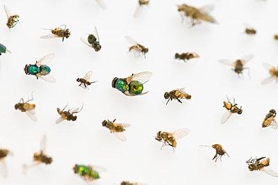 Tote Insekten - p6120262 von Pierre c.