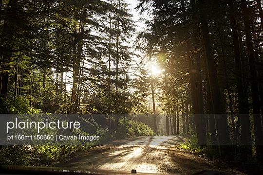 p1166m1150660 von Cavan Images