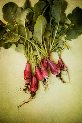 Bunch of freshly picked radishes - p1047m1137556 by Sally Mundy