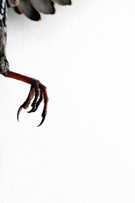Bird - p1105m1093196 by Virginie Plauchut
