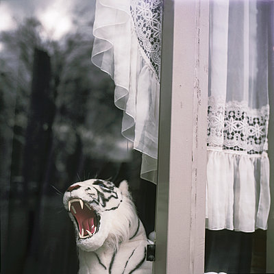 Stuffed animal by the window - p1385m1424427 by Beatrice Jansen