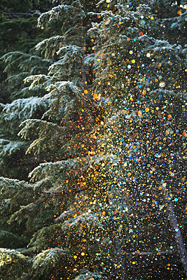 A very unusual situation of ice crystals falling from frosted trees and sparkling in the low afternoon sunlight which then produced small colored crystals of various rainbow colours, Crow Creek Road near Girdwood; Alaska, United States of America - p442m1179937 by Doug Lindstrand