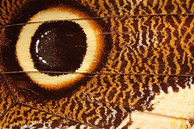 Macro butterfly - p1054m2278060 by Maria Kazvan