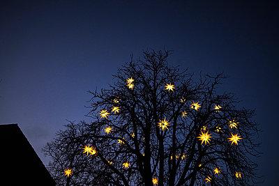 Germany, Tree with stars as Christmas illumination in the evening - p1312m2228798 by Axel Killian