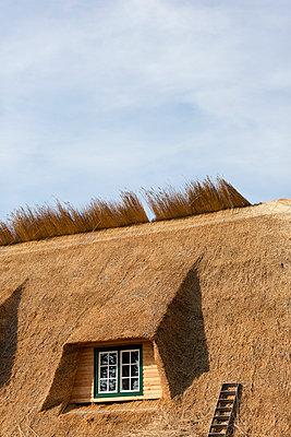 Decken eines Reetdaches - p248m949470 von BY