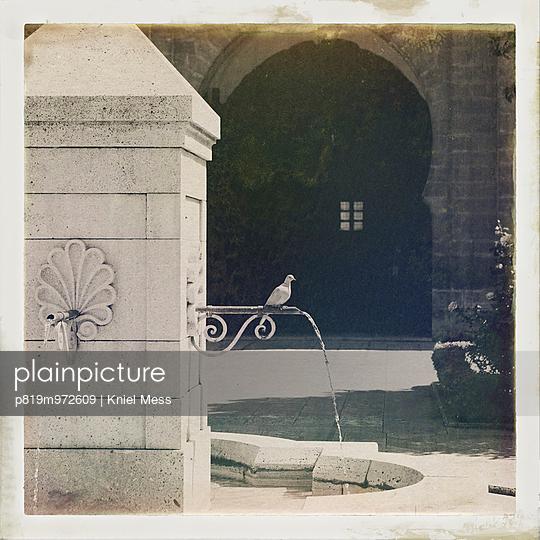 Eine Taube sitzt an einem Brunnen - p819m972609 von Kniel Mess