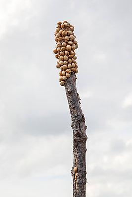 Schnecken auf einem Baumstamm - p1021m1585758 von MORA