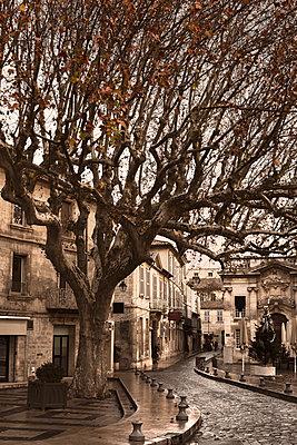 France, Avignon, tree, street - p300m1120874f by Carmen Steiner