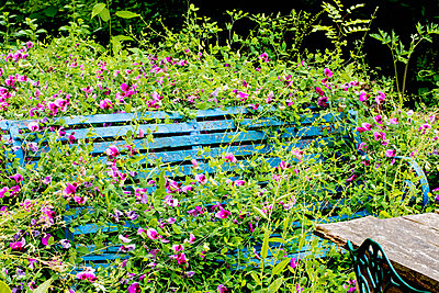 Park bench covered by flowers - p1082m1586465 by Daniel Allan