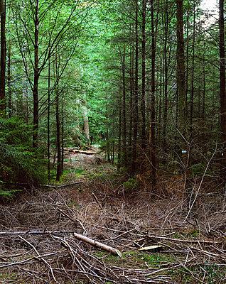 Abholzung - p324m883402 von Alexander Sommer