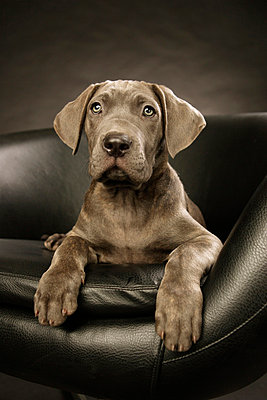 Dog - p4030076 by Helge Sauber