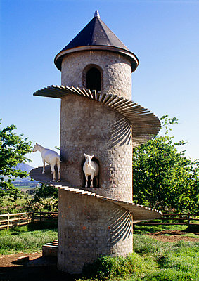 Goat House, cylindrical building with spiral ramp for goats, with goat in view. Cape Town Region. - p8551806 by Kim Sayer
