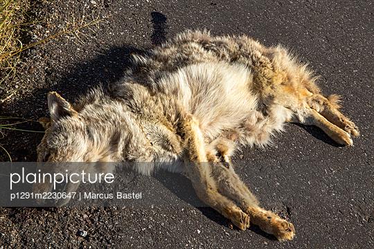 USA, Roadkill - p1291m2230647 by Marcus Bastel