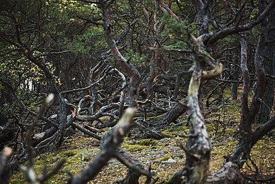 Trees - p1477m1586406 by rainandsalt