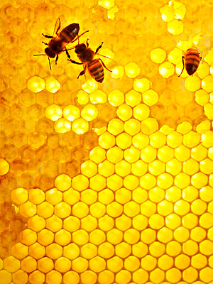 Honey bees Sweden - p312m1076838f by Jonn