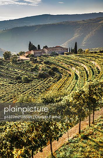 Italy, Veneto, Verona district, Valpolicella, Fumane, Typical landscape, vineyards - p1377m2105165 by Olimpio Fantuz