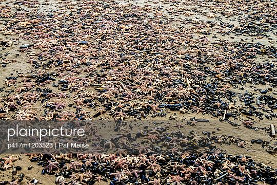 Seestern - p417m1203523 von Pat Meise