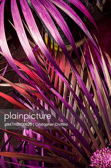 Lila Palmwedel mit Blüte - p947m2100626 von Cristopher Civitillo