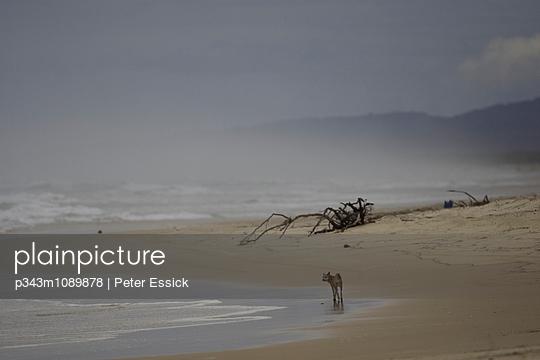 p343m1089878 von Peter Essick photography