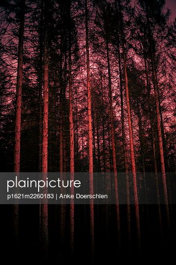 Roter Wald - p1621m2260183 von Anke Doerschlen