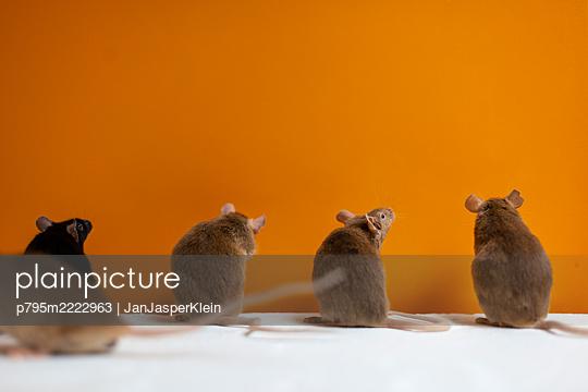 Padded mice - p795m2222963 by JanJasperKlein