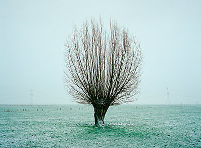 Willow in winter - p1132m1016974 by Mischa Keijser