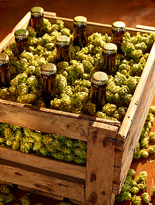 Bierflaschen in Holzkiste mit Hopfen - p897m1083246 von MICK