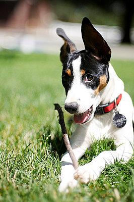 Dog collar - p4620396 by BHarman