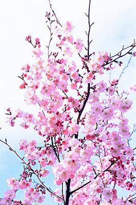 Spring - p885m907423 by Oliver Brenneisen