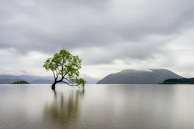 Lone Tree of Lake Wanaka against cloudy sky, South Island, New Zealand - p300m2144663 by Scott Masterton